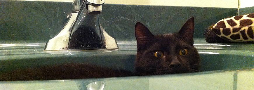 kitten-in-sink
