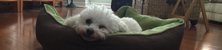 lazydog